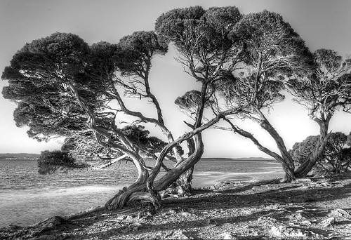 Twisted Trees, Lincoln National Park - Port Lincoln, South Australia [Explored]