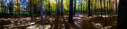 red panorama orange fall colors yellow forest golden iphone4s