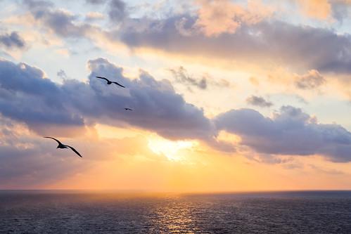 sea sky españa sun seagulls sol birds clouds sunrise canon dawn mar spain aves pájaros amanecer cielo nubes orangesky gaviotas rayosdesol ceuta sunlights 60d