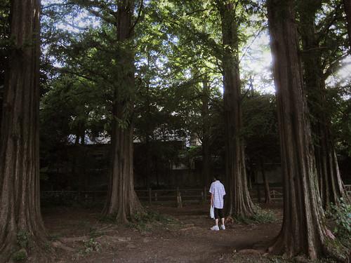 Zenpukuji, Suginami, Tokyo, Japan