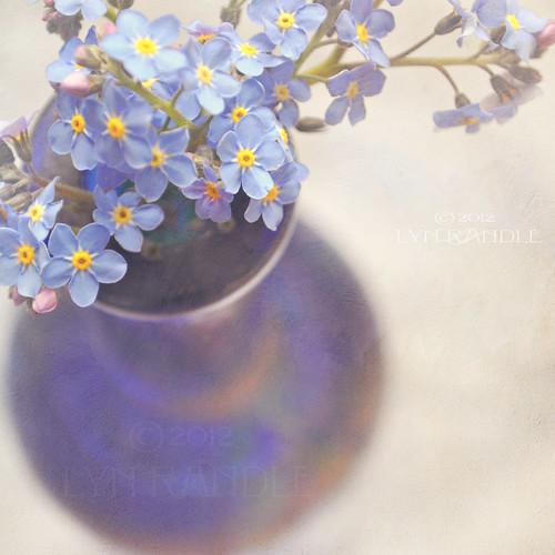 Forget me nots in blue vase