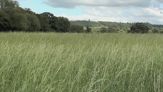 Rimpton Fields