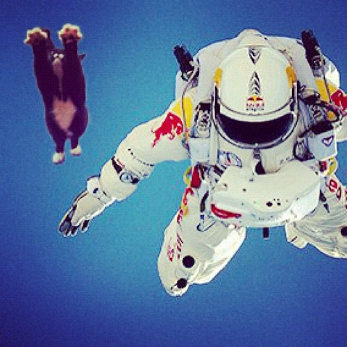 Lauren's kitty snuck in to the #redbull capsule to set a cat free fall record.