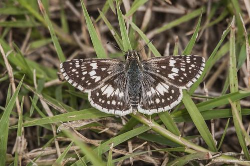 butterfly texas katy harrisco pauldrushingpark