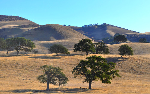 trees northerncalifornia bluesky hills hollister sanbenitocounty morningdrive goldenhills