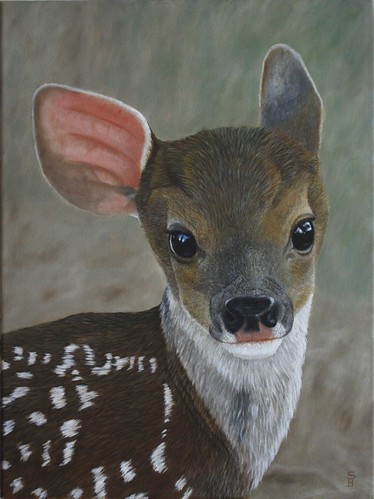 Baby-Deer  by Sid's art