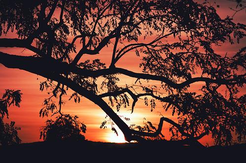 [フリー画像素材] 自然風景, 朝焼け・夕焼け, 樹木, 風景 - 中華人民共和国 ID:201210261600