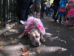 Pixie dog halloween costume