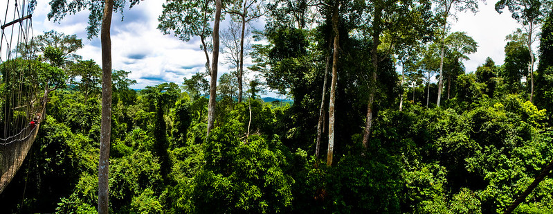 Kakum National Park panorama