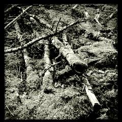 Firewood #2