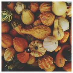 we love fall. #autumn #vscocam