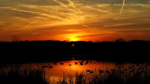 autumn trees sunset red sky orange sun lake black bird fall nature water grass animal yellow clouds reflections outdoors geese swan woods october darkness cloudy michigan ducks marsh ripples wetland sumpter crosswinds semichigan crosswindsmarshpreserve sumptermi