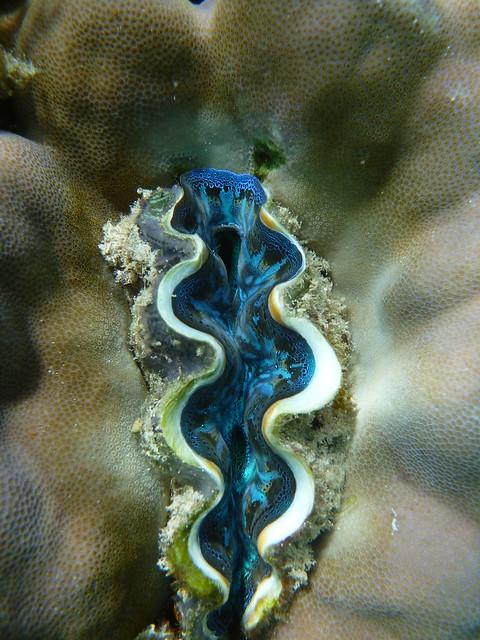 小蚌近照, 真是不可思議的花紋與顏色