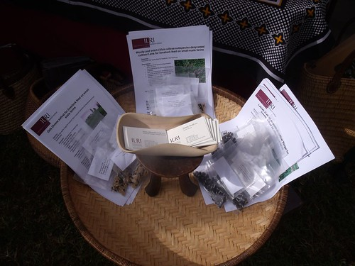 ILRI forage seed display at KARI event