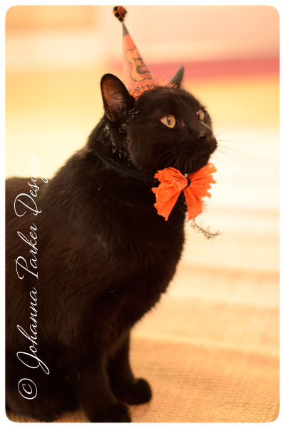 Halloween-Jack-profile