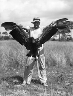Charles L. Broley holding up an eagle he banded: Tampa, Florida