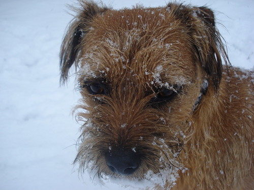 snow beard