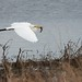Warren Lake TX - © Tail Feather Photos - Great Egret in Flight w/ Fish - Texas Bird Photography Locations