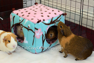 guinea pig fleece cube house review