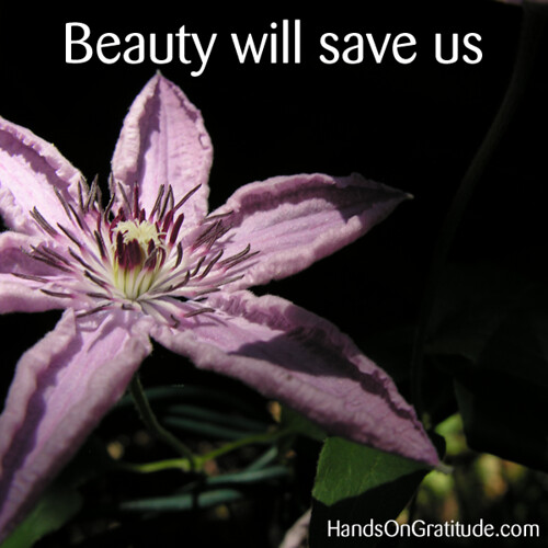Macro photo of purple clematis against a black background declaring boldly that Beauty will save us.