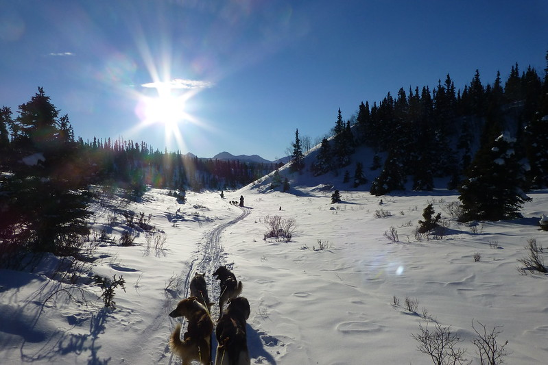 Fish Lake Dog Sledding