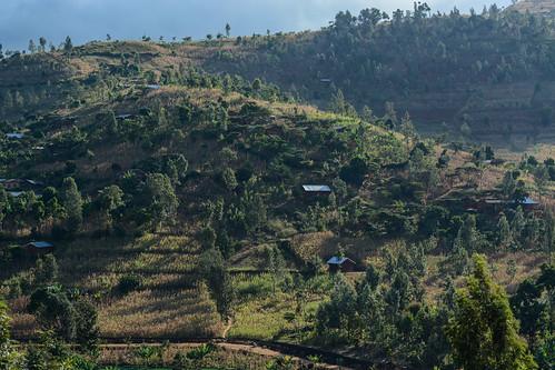 climatesmart valuechain dairy cattle forages tanzania climatechange livestock