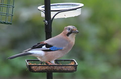 branch(0.0), finch(0.0), blue jay(0.0), stock dove(0.0), animal(1.0), fauna(1.0), jay(1.0), beak(1.0), bird(1.0), wildlife(1.0),