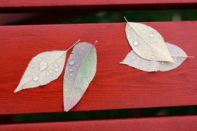 Rain and Leaves on a Red Picnic Table