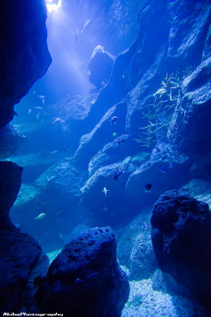 sumida-aquarium#28