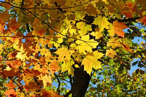 Rainbow of Leaves by KAM918