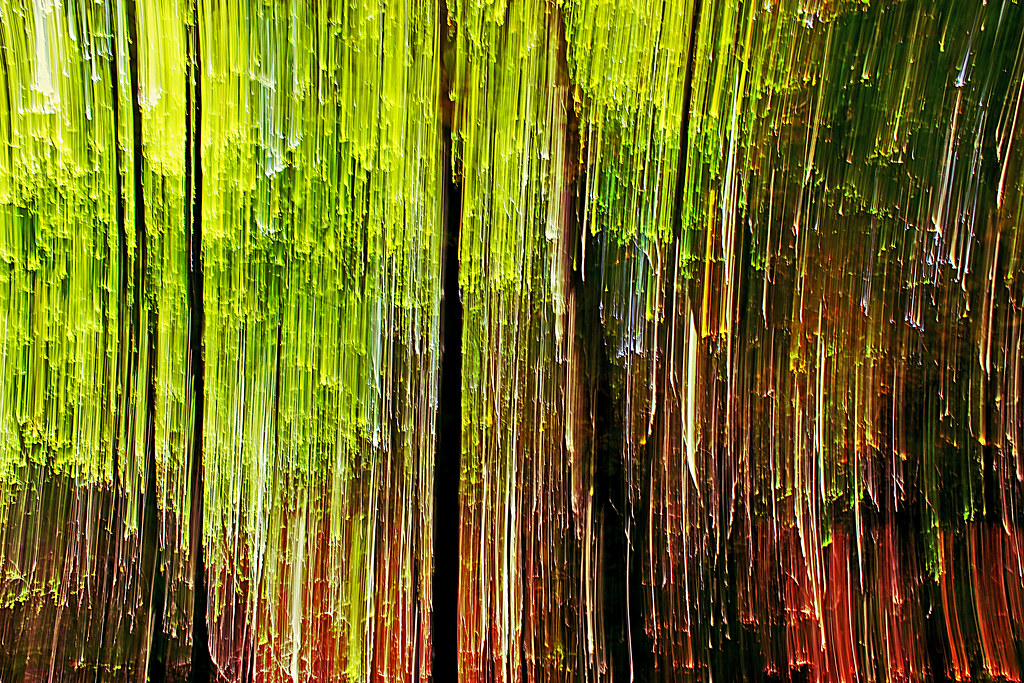 Abstract woods