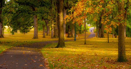 bushparkautumnpathleaves morning golden lowlight bushpark bushspasturepark autumn fall path scurve morninglandscape