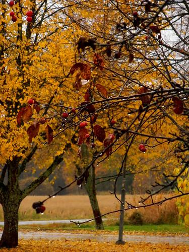 Chuvia de outono