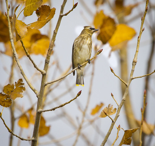 Fall 2012 North Beach Birding-small by Ricky L. Jones Photography