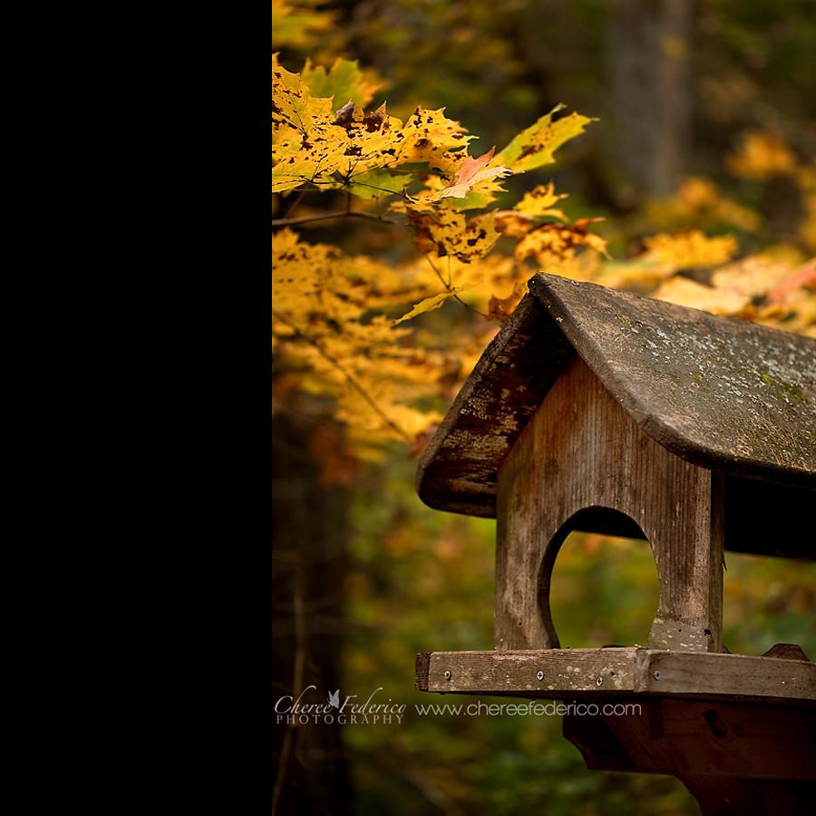 Birdhouse Blog