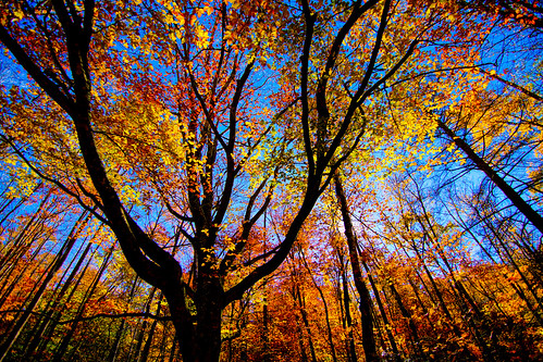 trees abstract fall leaves sony a65