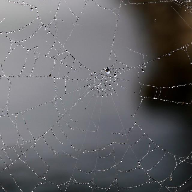 Web in the fog