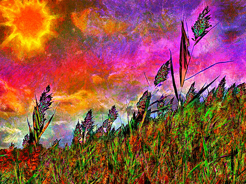 marh weed flower wild sunrise cloud color photoshop flickr google yahoo bing image montage getty stumbleupon facebook national geographic painting beautiful daum interesting creative surreal avant guarde
