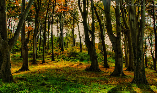 Autumn in the woods by xxx zos xxx