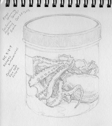 Octopus in a Bottle