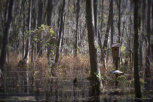 landscape swamp wetlands