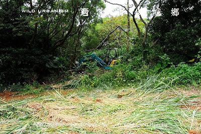除草進行到野步森林外緣