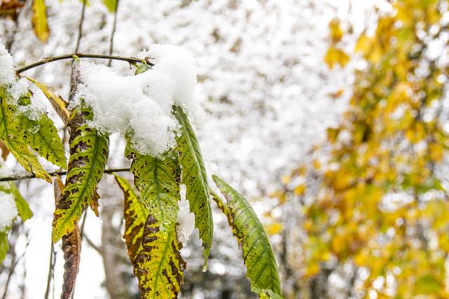 wintershots 3