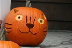 pumpkin 080