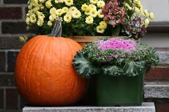 pumpkin 038