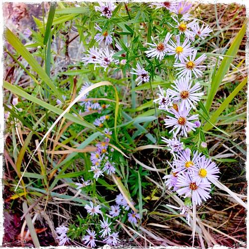park flower austin wildflowers iphone pleasantview marymooresearight