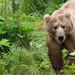 Kodiak Wildlife