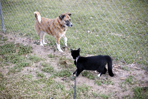 Jack Cat meets the neighbor dog.
