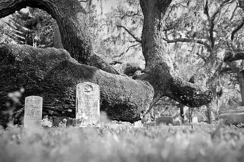 tree grave cemetary tombstone gravestone