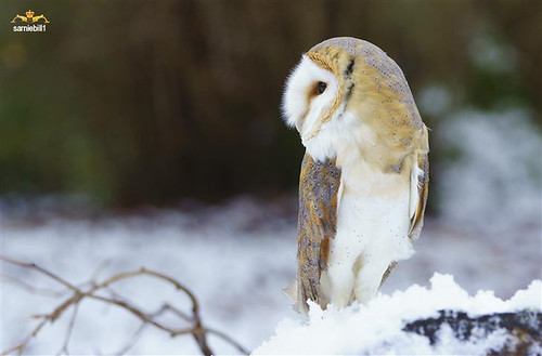 The Teaching Owl has cold feet. by sarniebill1